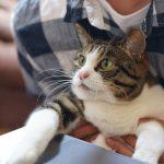 Przerwa na głaskanie – czy zwierzęta w pracy to dobry pomysł?